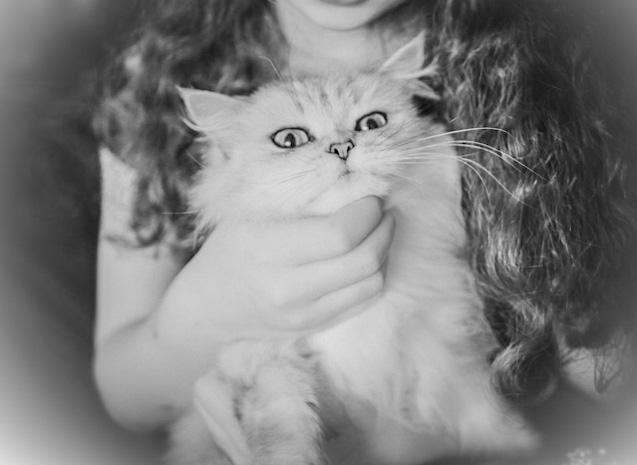 Comment tenir un chat sans se faire griffer ?