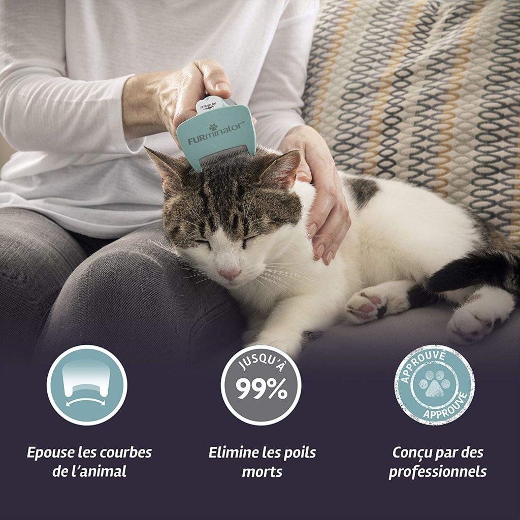 Comment enlever les pellicules d'un chat