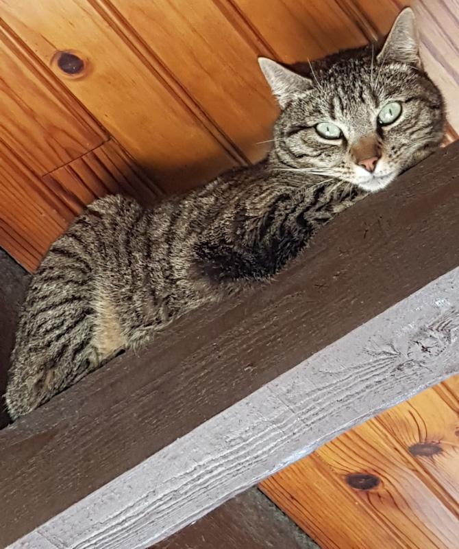 Chat perdu comment le retrouver à l'intérieur