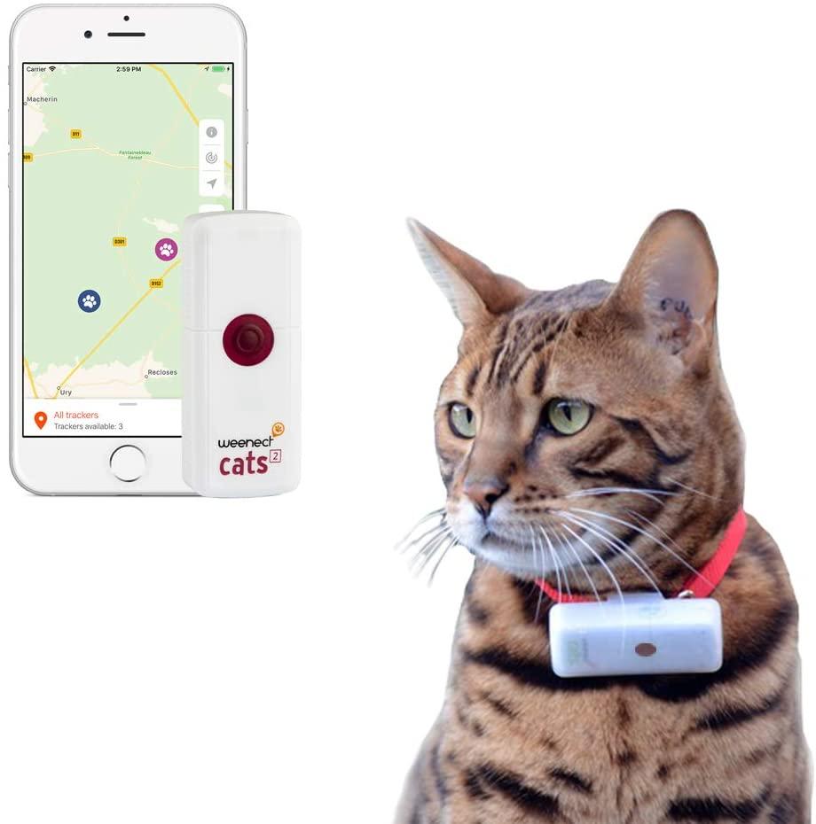 Comment habituer un chat à sortir et à revenir GPS