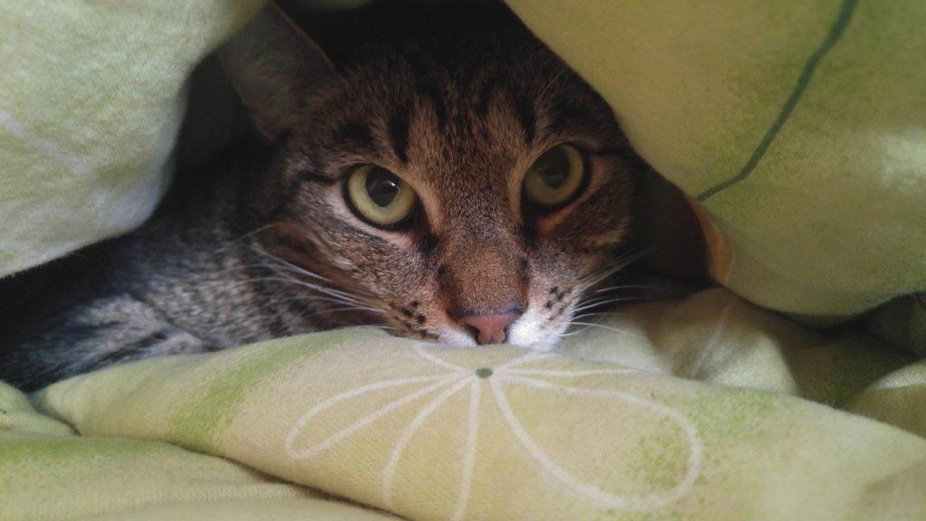 Mon chat fait pipi sur mon lit solutions