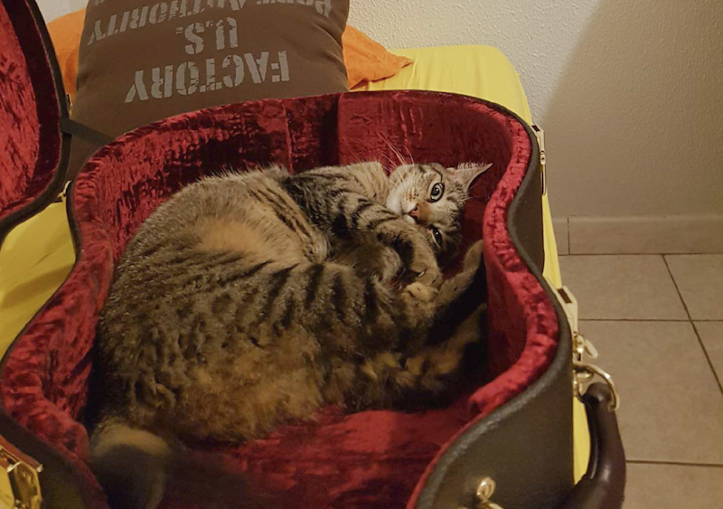 Astuces pour retrouver un chat perdu