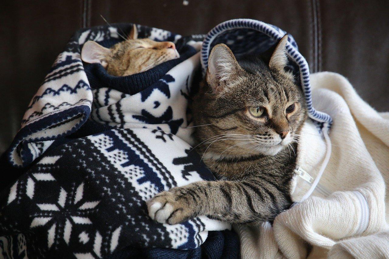sved lugter af kattepis