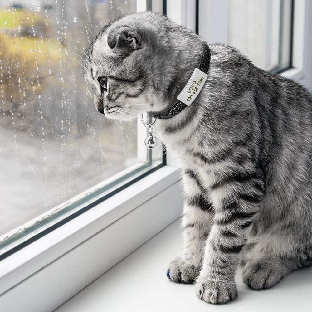 Retrouver un chat perdu astuce collier identification