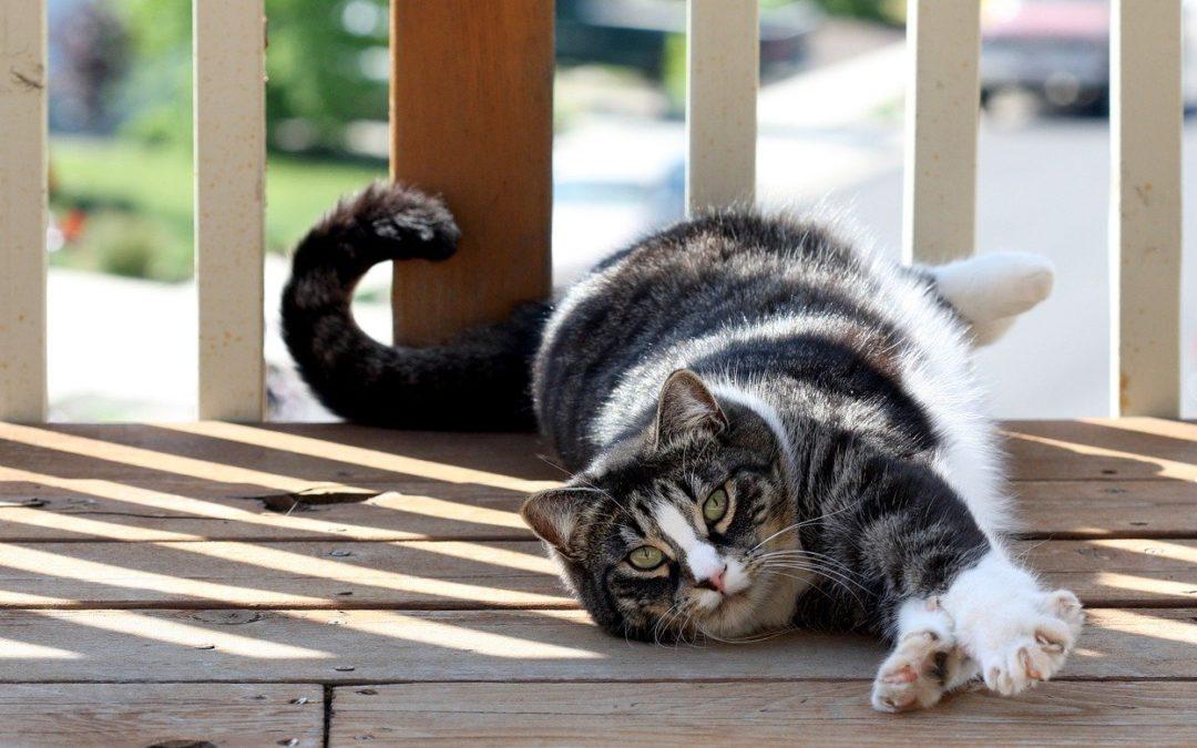 Comment punir un chat qui attaque