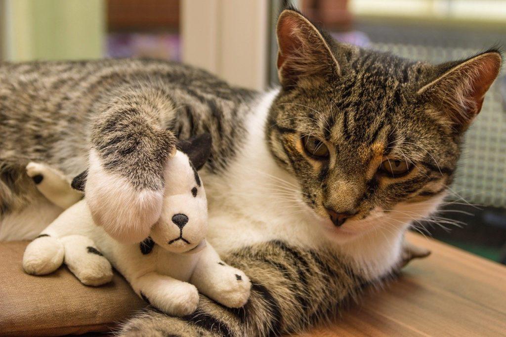 Relation fusionnelle avec son chat risques