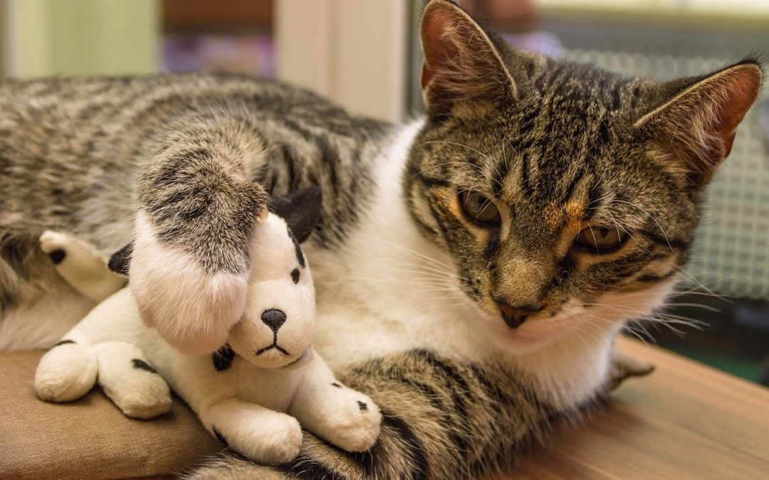 Chat qui s'ennuie – Comment occuper son chat ?
