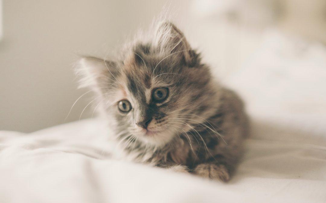 Que mange un chaton de 2 mois ?