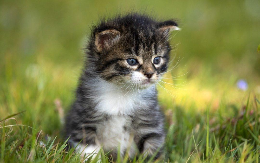 Comment nourrir un bebe chat de 2 semaines