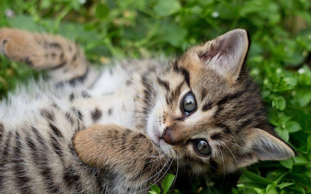 Comment nourrir un chaton – Que donner a manger a un chaton ?