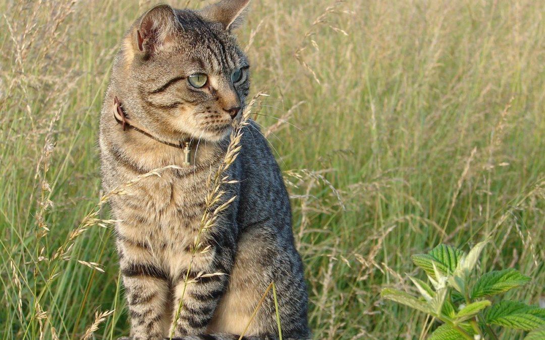 Collier pour chat anti etranglement – Quel collier choisir pour son chat ?