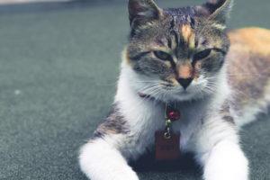 Collier pour chat anti etranglement - Quel collier choisir pour son chat ou son chaton