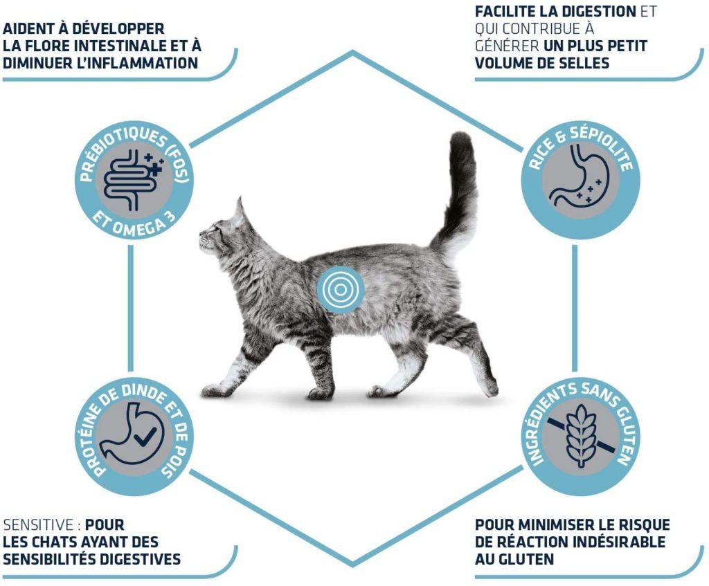 Alimentation sans danger pour les chats