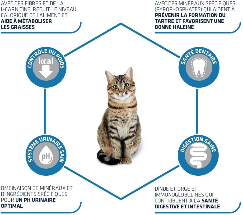 Nourrir un chat stérilisé croquettes