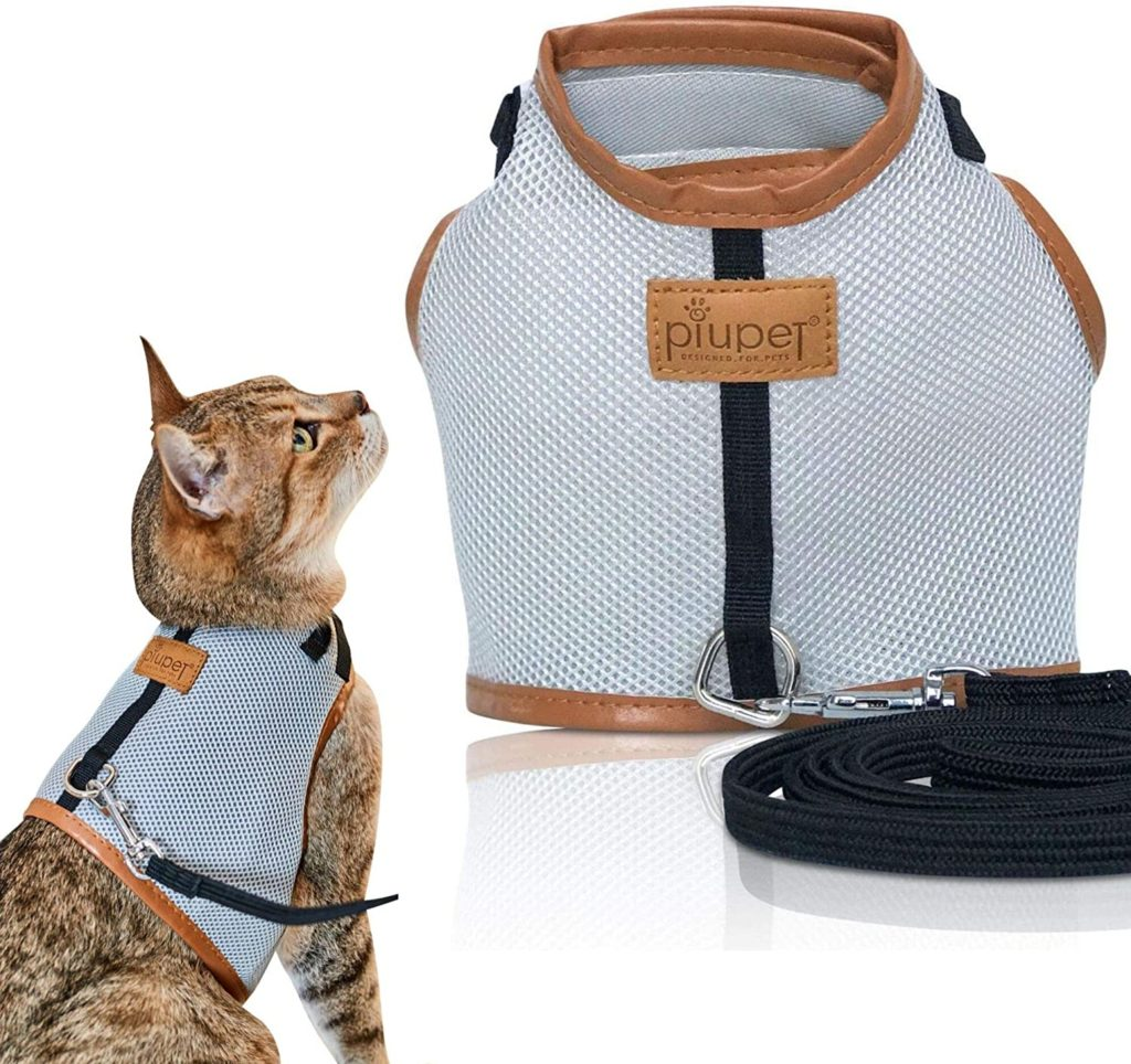Collier pour chat anti etranglement - Quel collier choisir pour son chat harnais ou collier