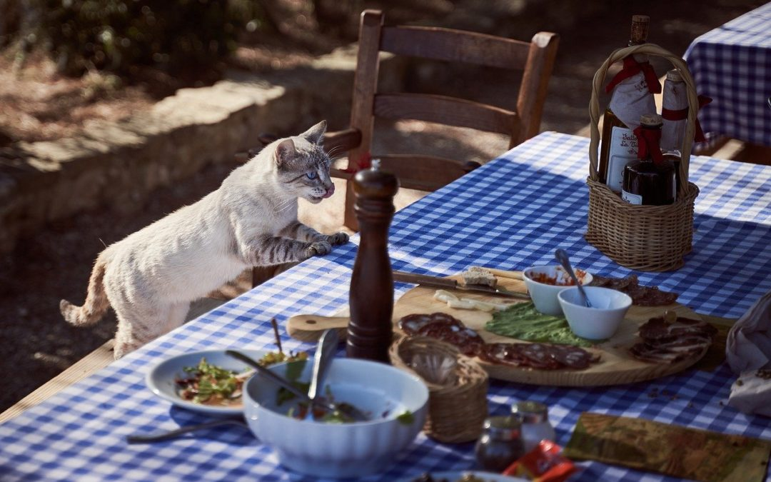 Aliments interdits aux chats – Que peut on donner à manger à un chat ?