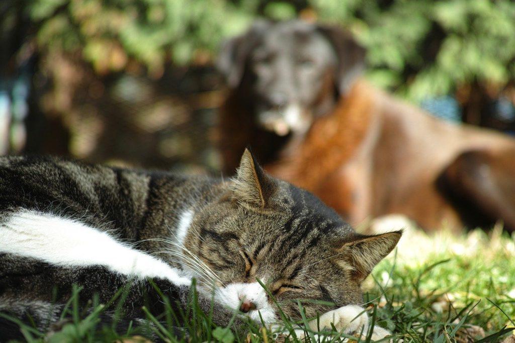 faire accepter un chien à un chat