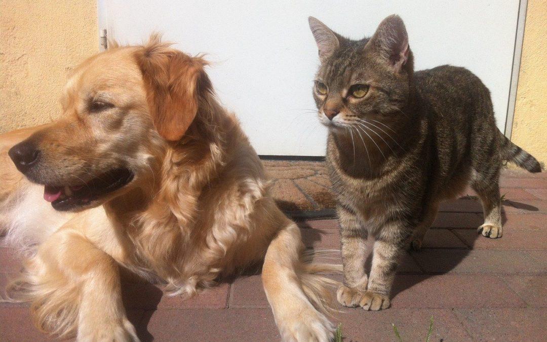Mon chat attaque mon chien – Comment faire accepter un chien à un chat