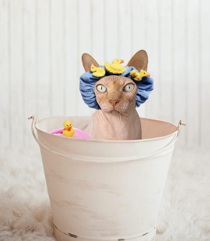 Laver un chat naturellement avec un shampoing maison