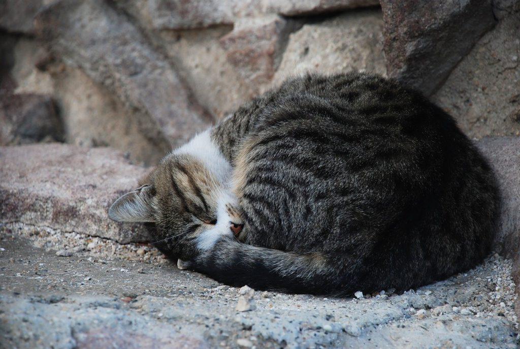 savoir si un chat est sourd par son comportement