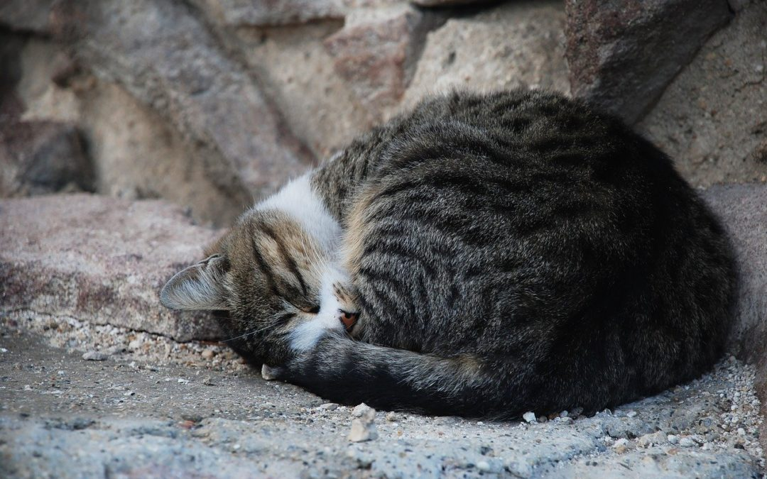 Kan een kat verhongeren?