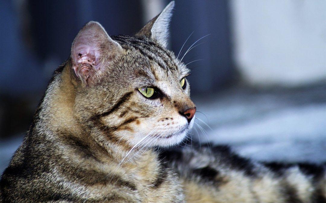 Mon chat ne vient jamais sur moi – Comment rendre son chat plus câlin
