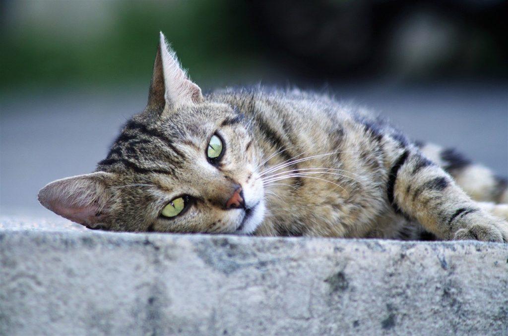 Est ce qu'un chat peut se laisser mourir de faim