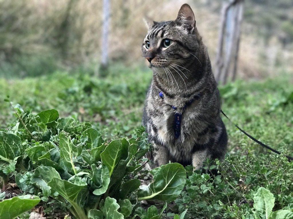Déménagement chat combien de temps avant de sortir dehors