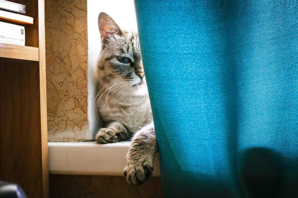 Déménagement chat combien de temps avant de le sortir ?