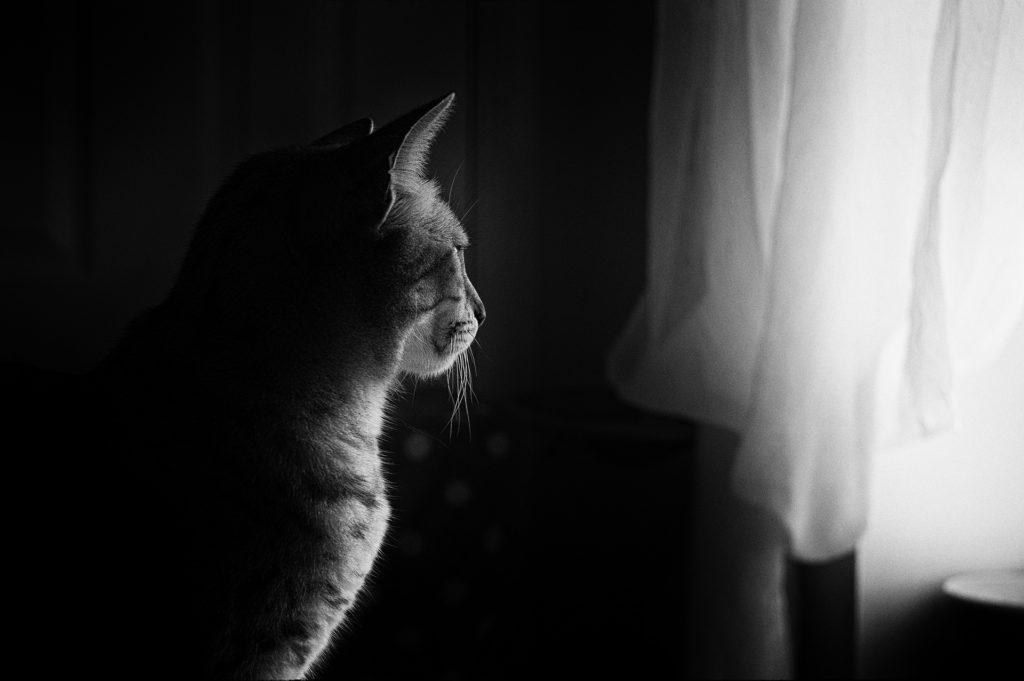Peut on laisser un chat seul 15 jours ?