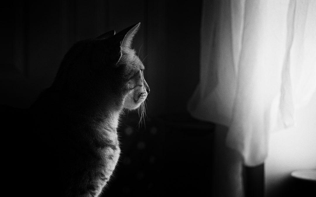 Chat qui miaule la nuit – Comment faire taire un chat qui miaule ?
