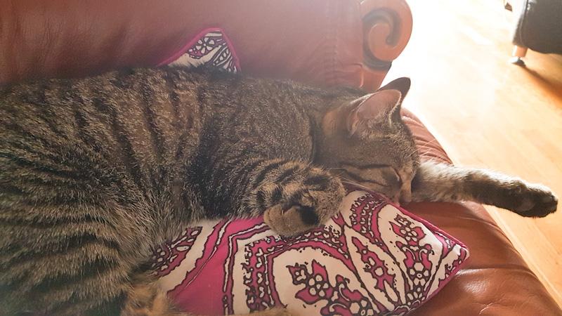 如何知道猫是否生病