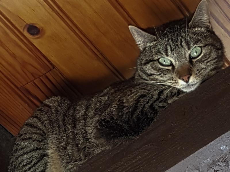 mon chat m'attaque sans raison mes conseils