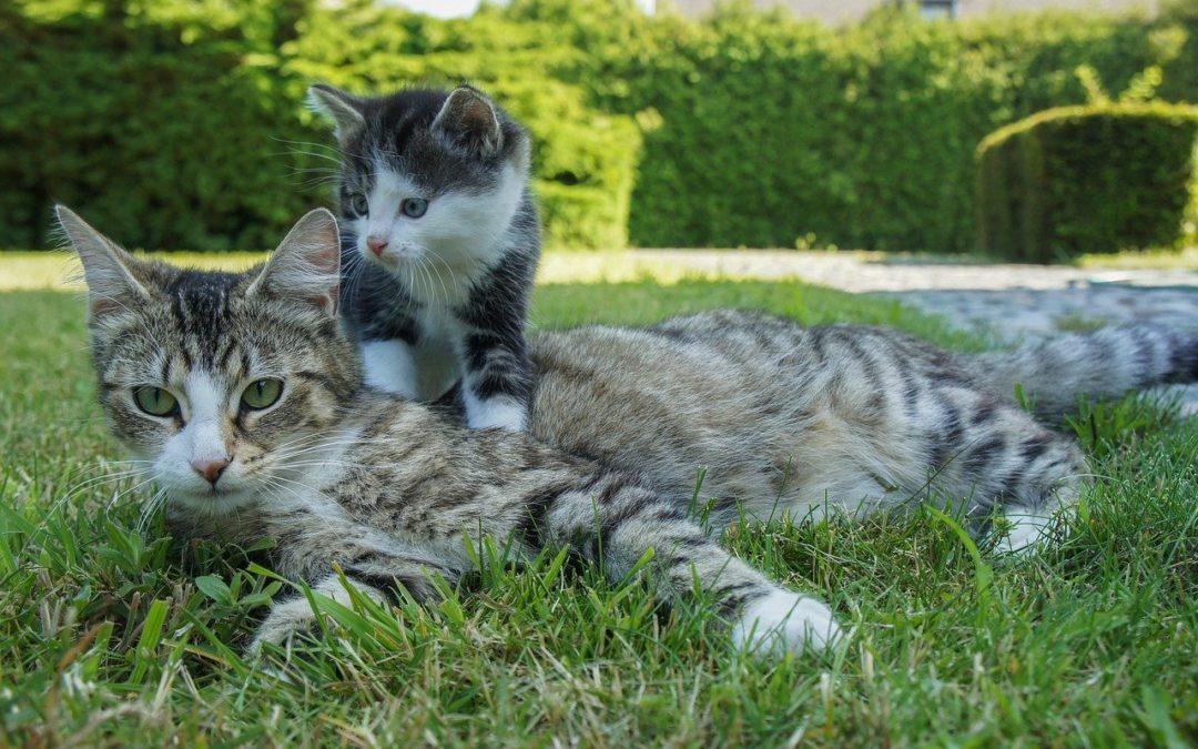 Kittengewicht 6 maanden