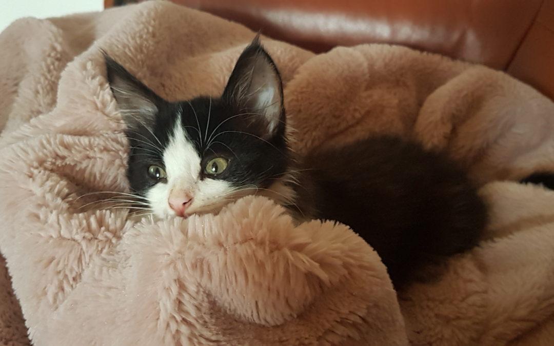 Gato cocô de líquido - O que dar a um gato com diarréia?