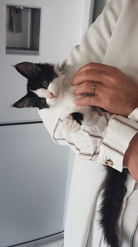 comment élever un chaton de 3 mois