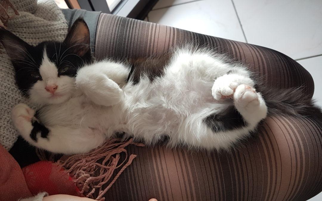 Waarom bijt mijn kitten me - hoe kan ik het stoppen?