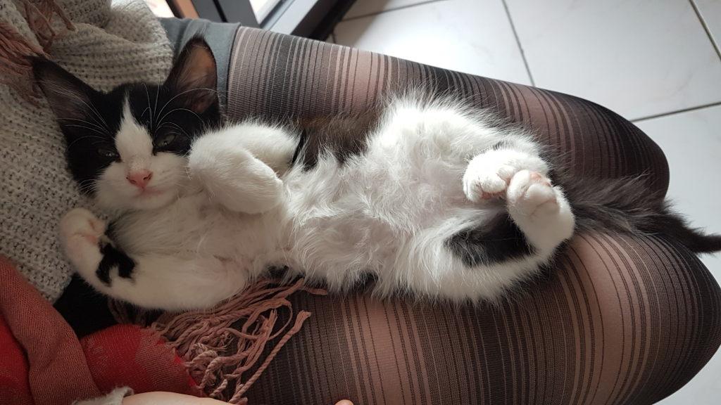 habituer son chaton à la litière.