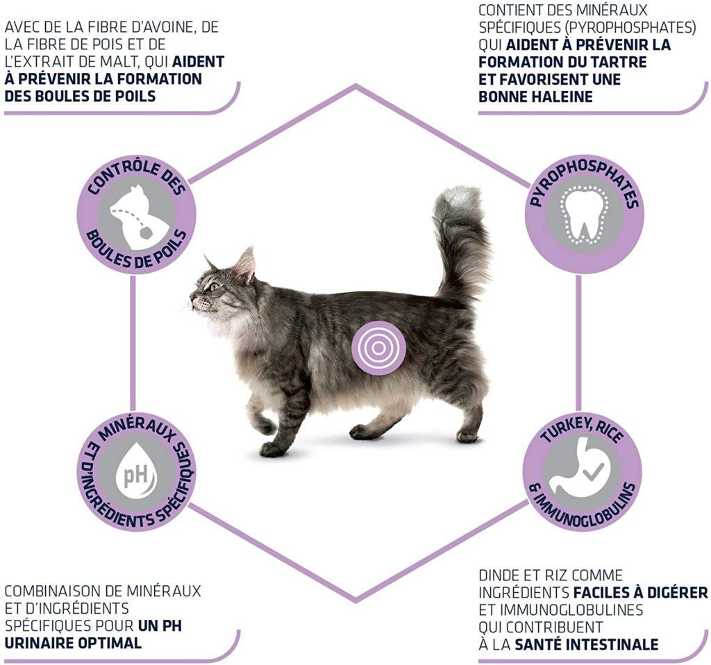 Chat qui vomit souvent - Vomissement chat boules de poils
