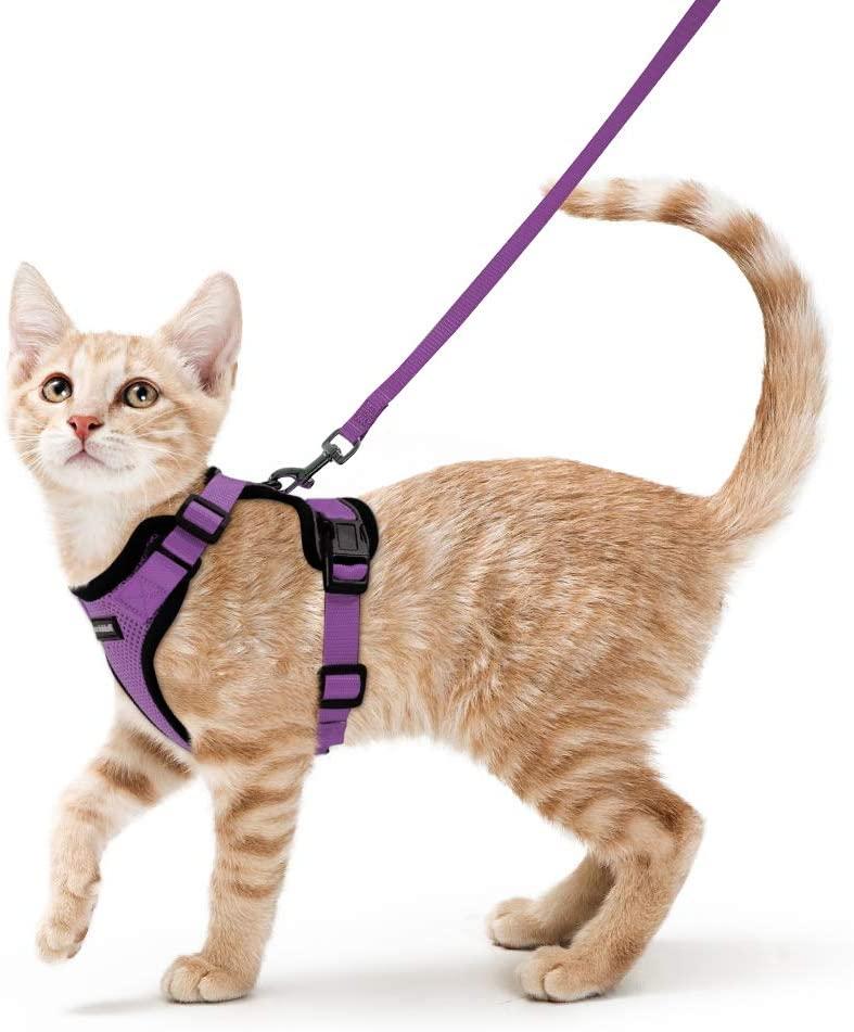 laisser sortir son chat - Ensemble harnais et laisse pour chat