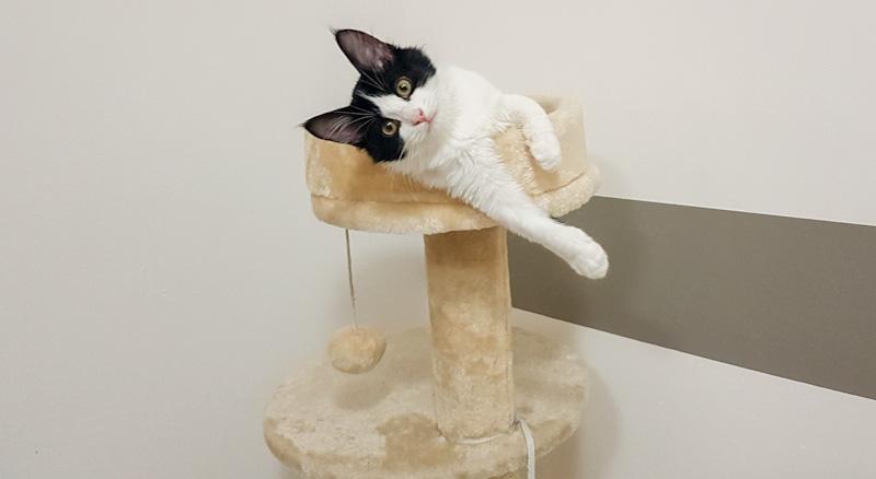Mon chat me mordille - Solution de l'arbre à chat