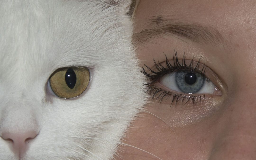 Hoe zien katten mensen?