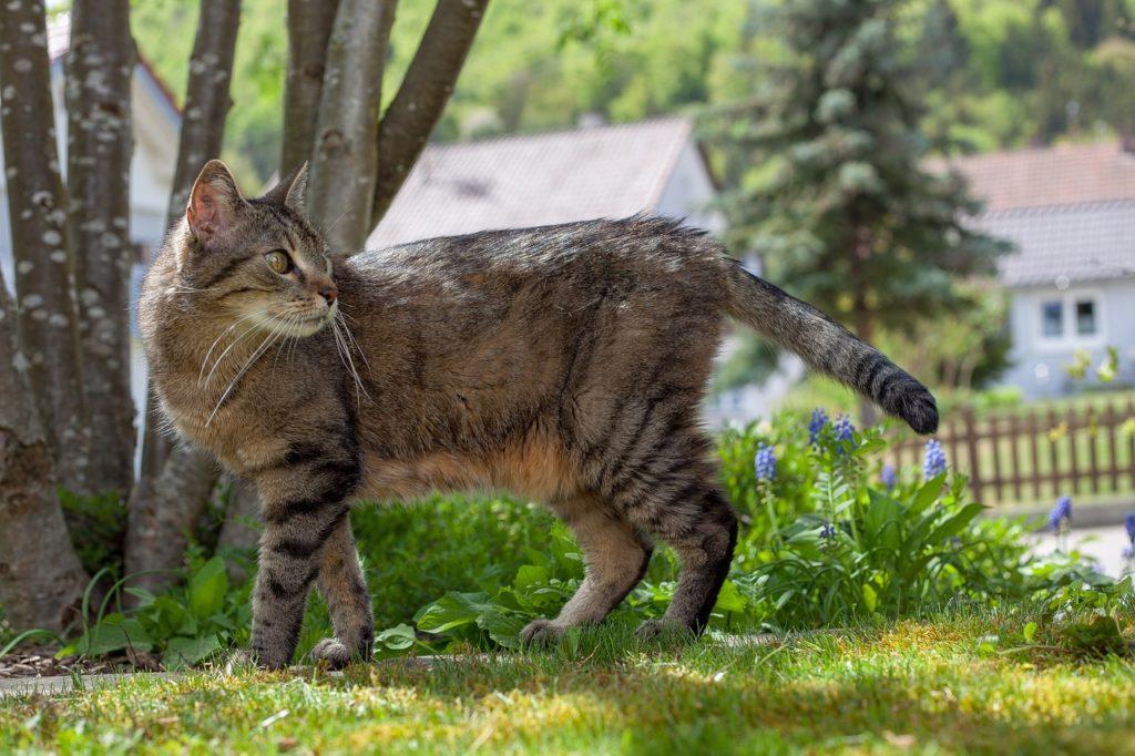 Comment repousser les chats des jardins et les chats envahissants