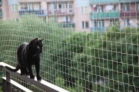 Comment habituer son chat à sortir et revenir - Filet pour balcon