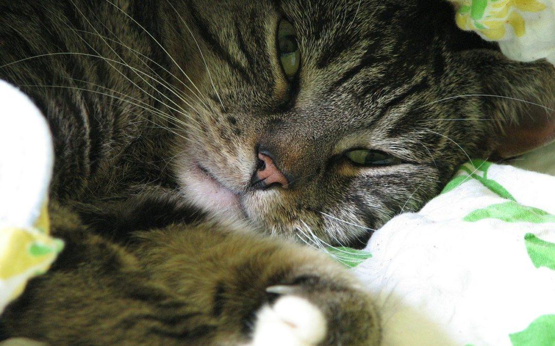 Mijn kat likt me - Hand, gezicht, haar, vingers betekent