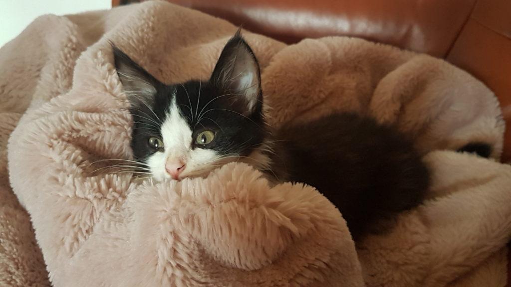 Mon chaton n'est pas propre – Comment éduquer son chaton à la litière