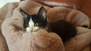 heures de sommeil chaton 3 mois