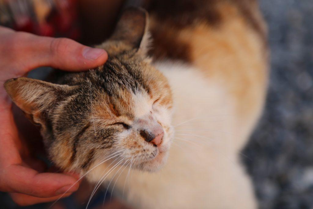 Relation fusionnelle avec son chat