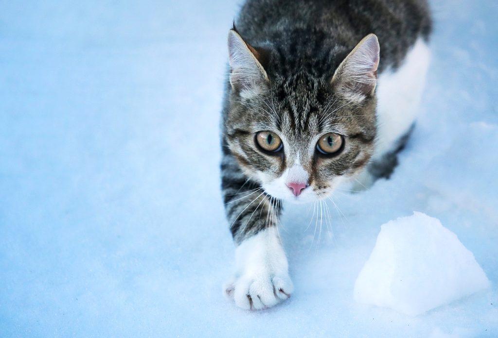 Un chat peut il mourir de froid dans la neige
