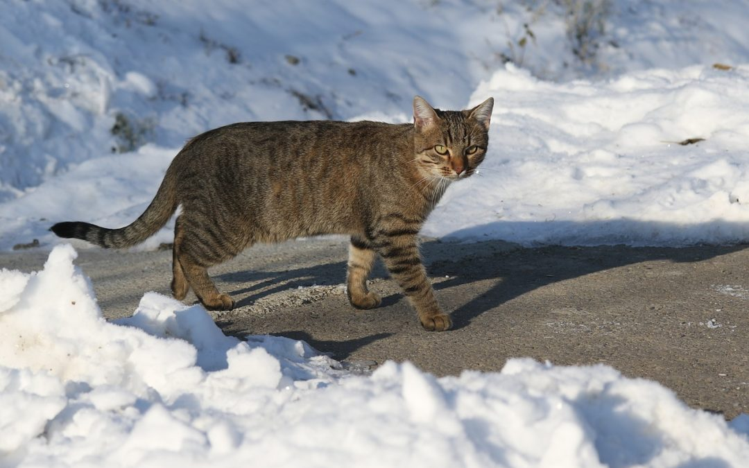 Can a cat freeze to death? Danger of cats outside in winters